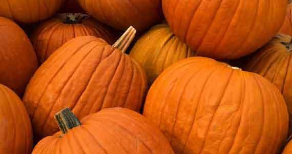 pumpkins-close